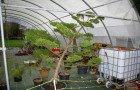 Exemples de végétaux en nuage
